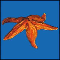 STARFISH T-SHIRTS & GIFTS