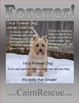 Forever Dog!