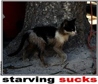 Clarissa Harwell's Stray Cat