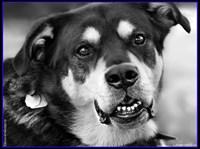 Dianne Woods' Handsome Dog