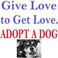 Give Love Get Love. Adopt A Dog