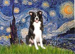 STARRY NIGHT<br>& Border Collie