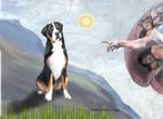 CREATION OF MAN<br>Greater Swiss Mountain Dog