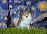 STARRY NIGHT<br>& Parti Pomeranian