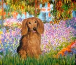GARDEN AT GIVERNEY<br>Sable long haired Dachshund