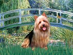LILY POND BRIDGE<br>& Australian Terrier