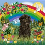 RAINBOW COUNTRY & Affenpinscher