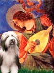 MANDOLIN ANGEL<br>&Bearded Collie #1