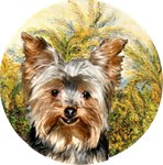 Yorkshire Terrier #17<br>in Morning by Mo