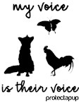 MY VOICE IS THEIR VOICE