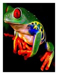 Colorful Art Deco Frog
