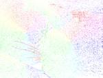 Rainbow Cat Fur
