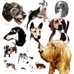 Hounds Hound dog art by Madeline Wilson