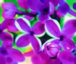 Lilac Art