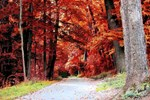 Into The Red Rustic Forest