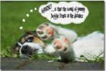 Jack Russell Humor-Hark