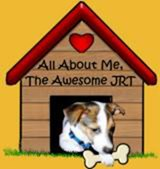 Words About Our Jack Russell Terrier