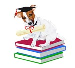 Jack Russell Graduation
