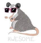 Funny Awesome Possum