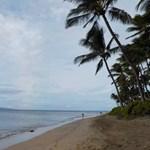 Maui Beach Palms