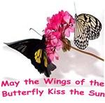 Butterfly Butterflies Peace