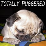 Totally Puggered