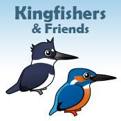 Kingfishers & Friends
