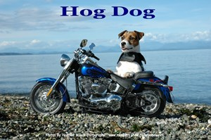 Harley The Hog Dog