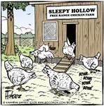 Head-Free Range Chickens