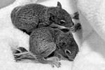 Cute Baby Squirrels