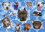 Pit Bull Snowflakes