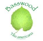 Basswood Leaf 2