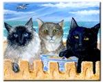 Kitties Day At The Beach