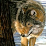 Reclaiming the Wild