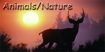 Animals/Nature