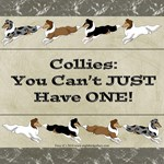Collies: You Can't JUST Have ONE!