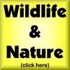WILDLIFE & NATURE DESIGNS