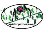 spider vine