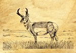 Antelope Drawing