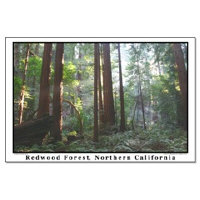 <b>san francisco redwoods + redwood forests poster