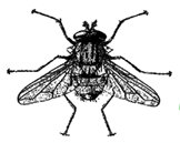 The Infamous Fly