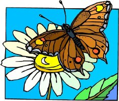 Butterfly Art Section 8