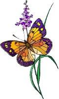 Butterfly Fields 2