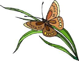 Butterfly Fields 6