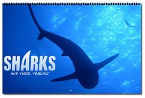 SOS Shark Calender