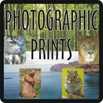 Photographic Prints