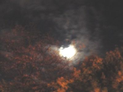Autumn Moon Print