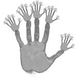 Hand Tree Fractal