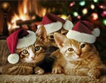 Kittens Christmas Cards