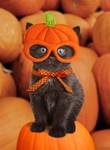 Pumpkin Kitten Halloween Cards
